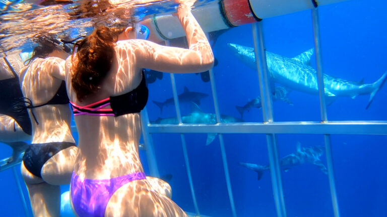 Thumbnail_098_Shark_Cage_Diving_2018